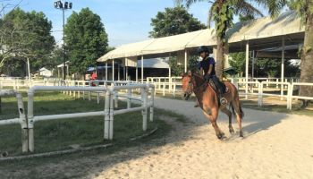 Why Should I Join The Equine School Program at DARC?