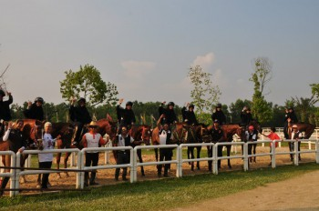 Some of Our Horses
