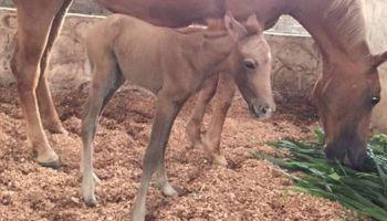 Meet Our New Stallion!